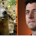A family of woodchucks ate Paul Ryan's car. The internet responded hilariously.
