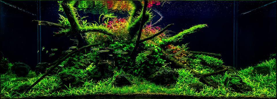 hồ thủy sinh bố cục lũa với cây cối rậm rạp của tác giả Filipe Oliveira