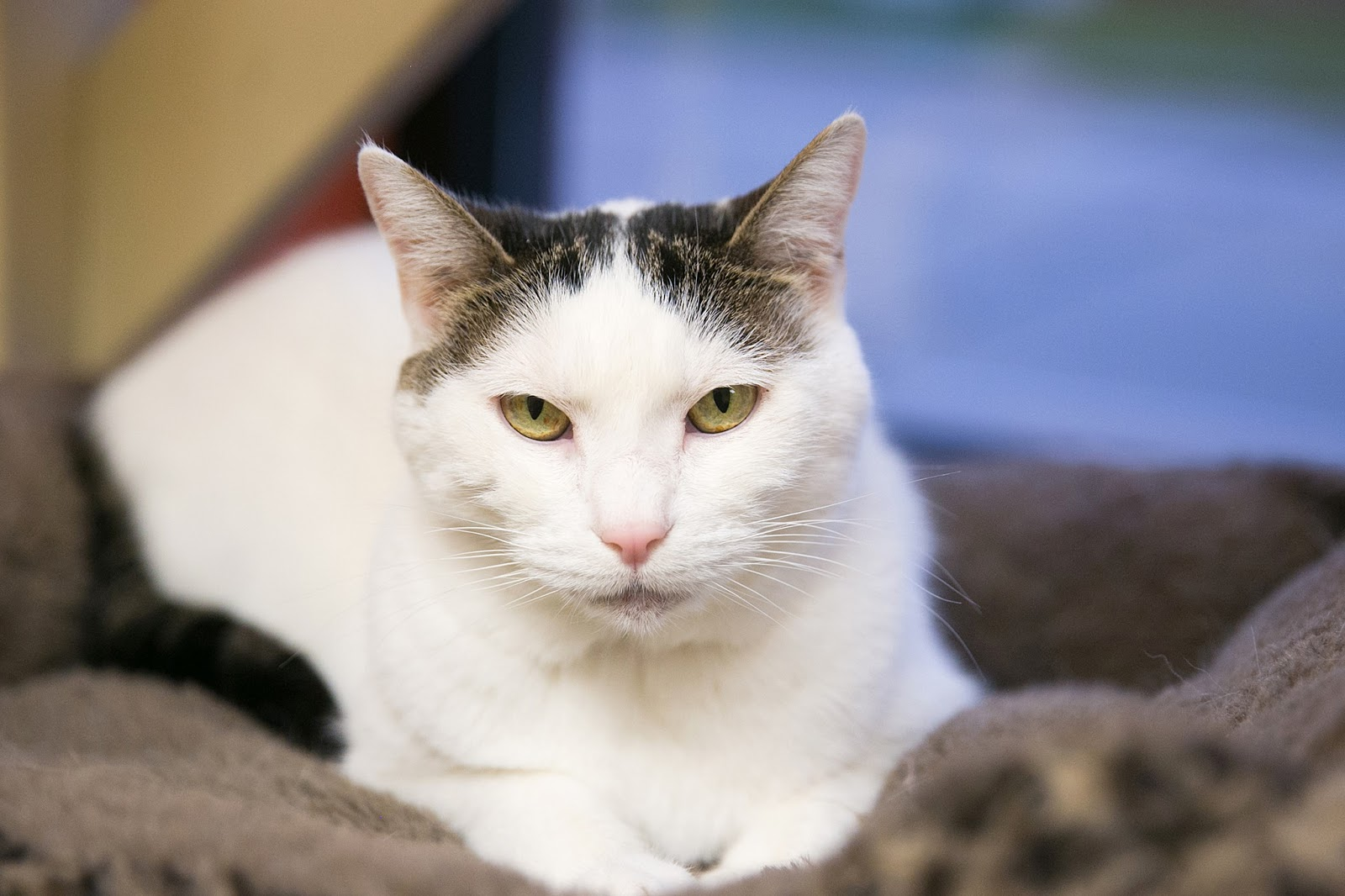 Feline Rescue Cat Tales: Where do our cats come from?