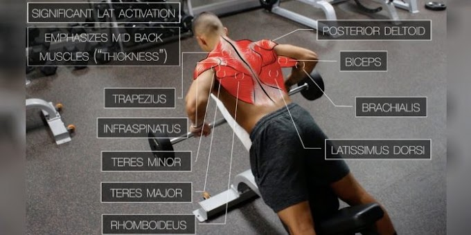 The 5 Best Science-Based Back Workout For Target Every Muscle