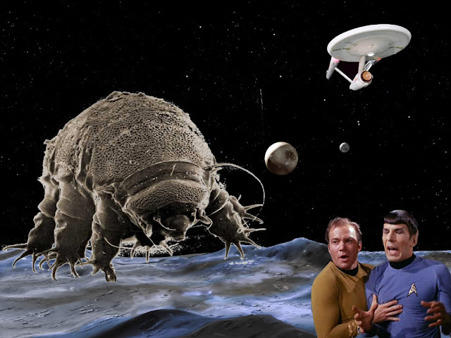 The Otherworldly Abilities of Tardigrades or Water Bears