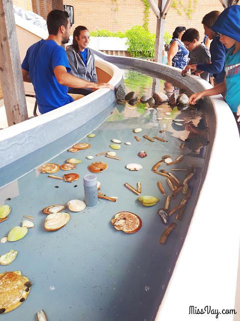 L'Aquarium et le Centre Marin de Shippagan