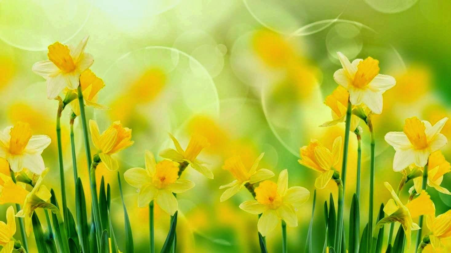 Koleksi Bunga Untuk Header Blog Dan Facebook  Relaks Minda