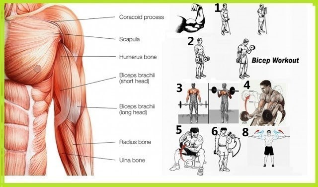 Arm Workouts To Build Muscle Fast