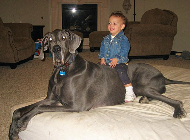 Giant George: The World Tallest Dog - Feast Your Eyes