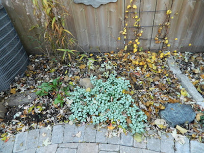Cabbagetown garden makeover before by Paul Jung Gardening Services Toronto