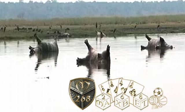 asihan... Lebih dari 100 Kuda Nil di Namibia Mati Mendadak Diduga karena Antrak