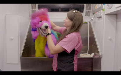 Well Groomed 2019 SXSW documentary movie still Adriane Pope washing her dog