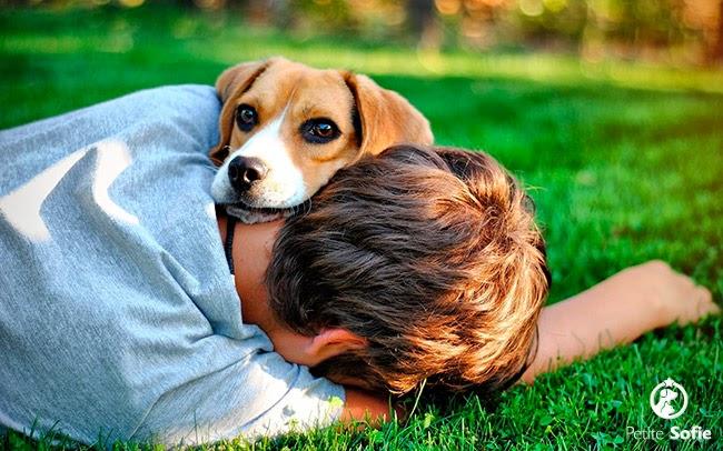 Cãozinho de solteiro: presença fiel