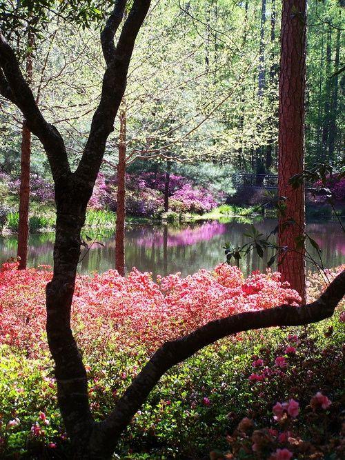 Callaway Gardens, Georgia, USA