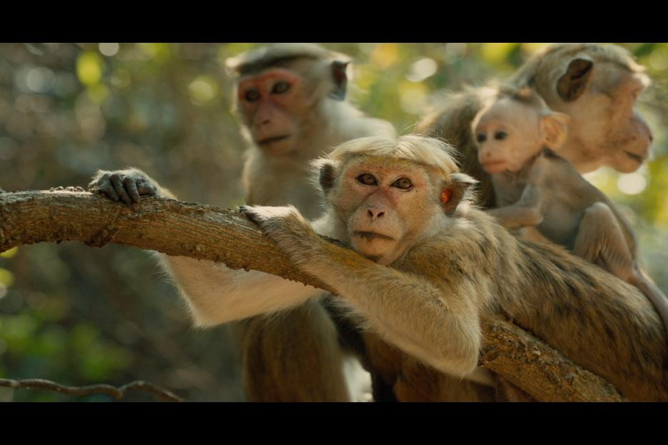 Monkey Kingdom 2015