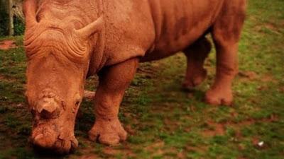 """La inspección más reciente en el South Lakes Safari también ha concluído que el zoo tiene sobrepoblación y que no existe """"cuidado veterinario de ningún tipo""""."""