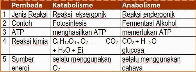 Contoh Soal Biologi Anabolisme - Guru Paud