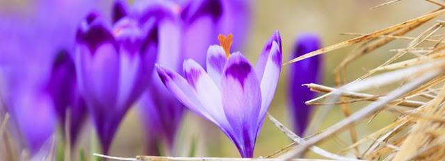 O przeprowadzkach, porządkach i tęsknocie za wiosną [podsumowanie lutego]