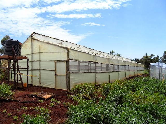 Wooden Greenhouse in Kenya, Metallic greenhouse