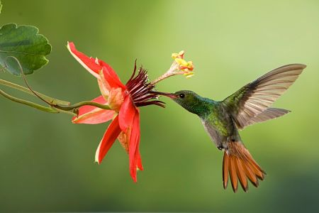 el colibri leyenda maya