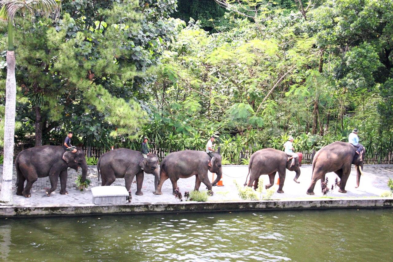 Hasil gambar untuk 5. Kebun Binatang Gembira Loka