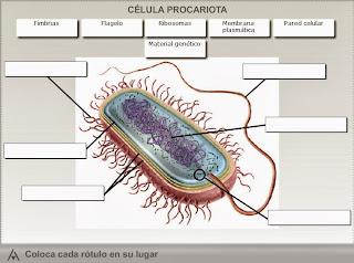 http://www.edistribucion.es/anayaeducacion/8430150/recursos/u01/u01_01_epi_02/actividad1_2/index.html