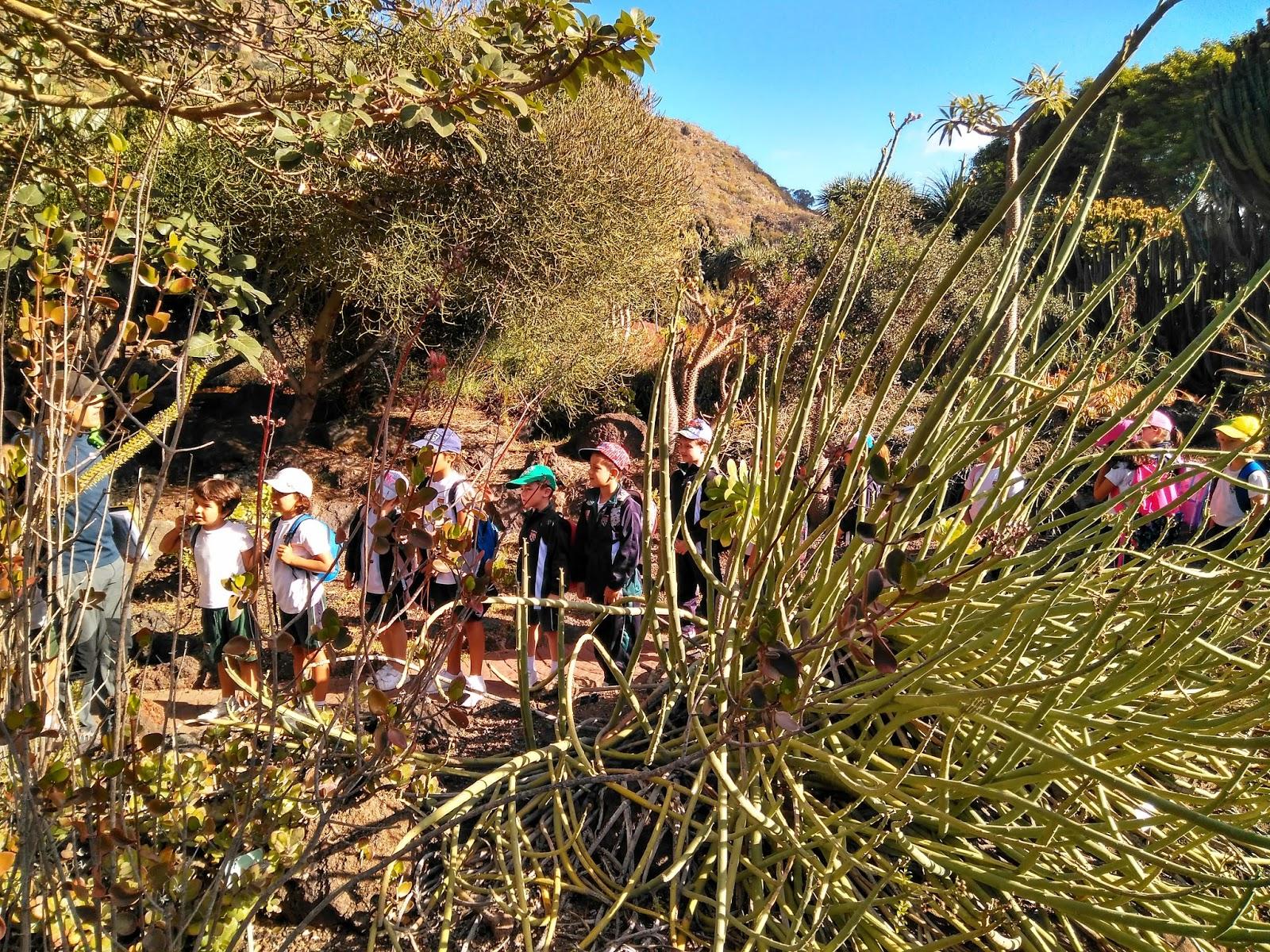 Ludolengua los alumnos de primero disfrutan de el jard n for El jardin canario