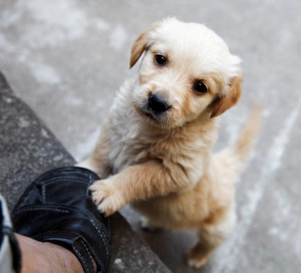 Little Dog Scrating Big Dog Site Youtube Com