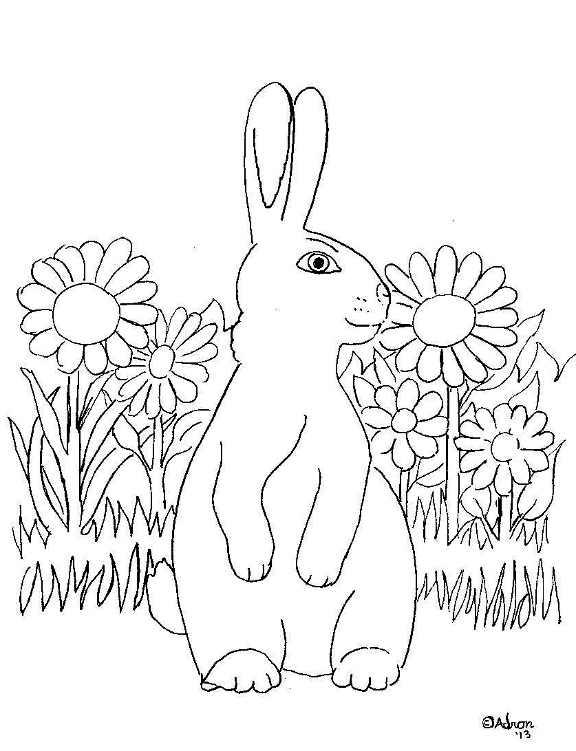 bunny in the grass coloring page wallpapers