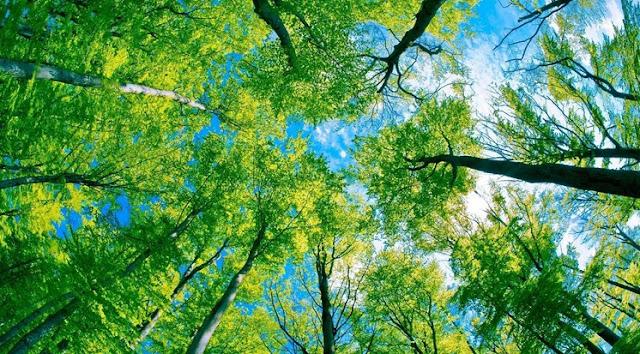 Pengertian Lingkungan dan Pengelolaannya