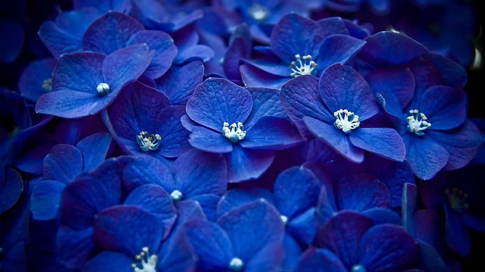 Pretty Flowers Tumblr Hd Gardening Flower And Vegetables