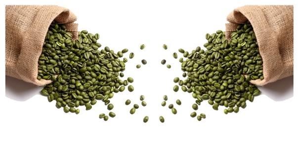 Café verde emagrece, queima gordura e combate diabetes e acelera o metabolismo Consumir grãos de café verde ajuda perder peso, é a nova moda para emagrecer.