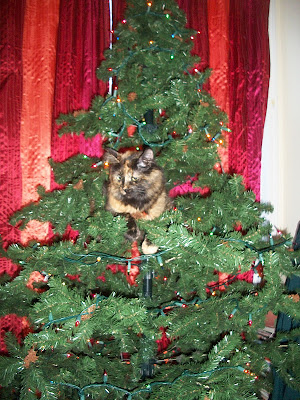 Cat sitting in a Christmas Tree