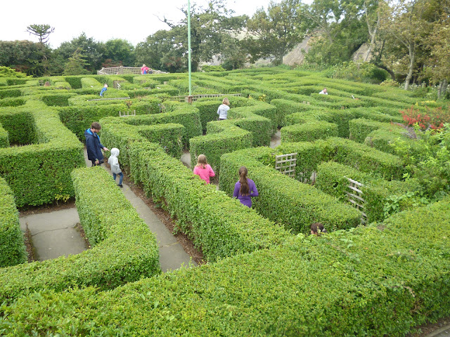 hedge maze Blackgang chine