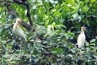 taman burung tmii