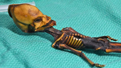 The Atacama Alien Mummy