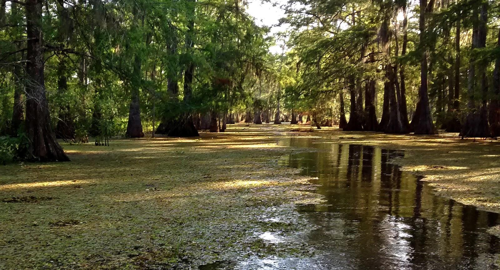 Living Rootless Lake Martin Louisiana Late Spring Visit