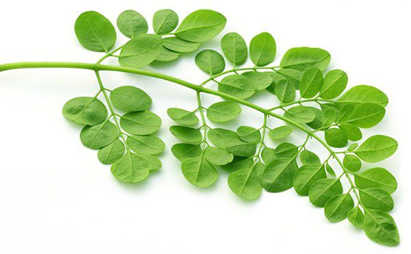 Miraculous Moringa: Reasons Why it Should be Part of our Diet