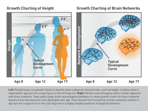 Special Needs Digest Could A Brain Growth Chart Spot Attention