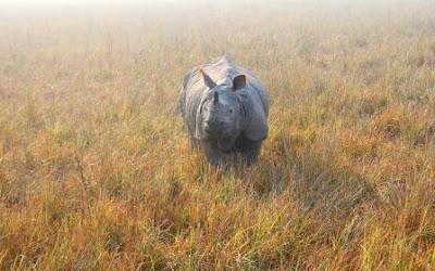 One horn Rhino images of kaziranga national park, Assam