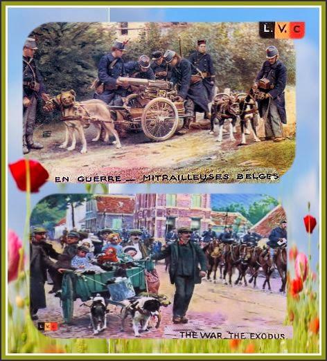 Belgie, belgium, Belgique, grande guerre, 1914, 1918, trabchées
