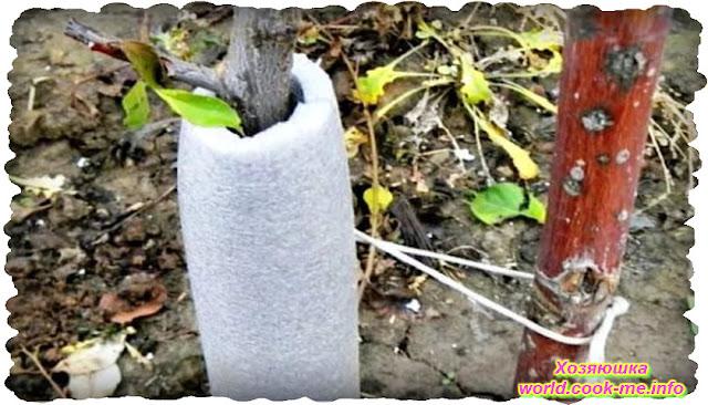 Как защитить сад от грызунов зимой ?