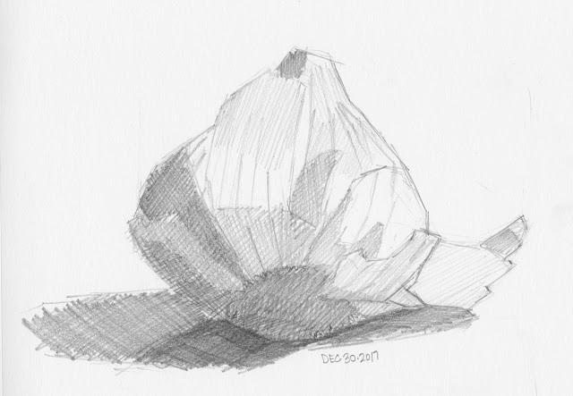 Daily Art 12-30-17 still life sketch in graphite number 88 - garlic bulb