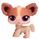 Littlest Pet Shop Multi Packs Chihuahua (#438) Pet