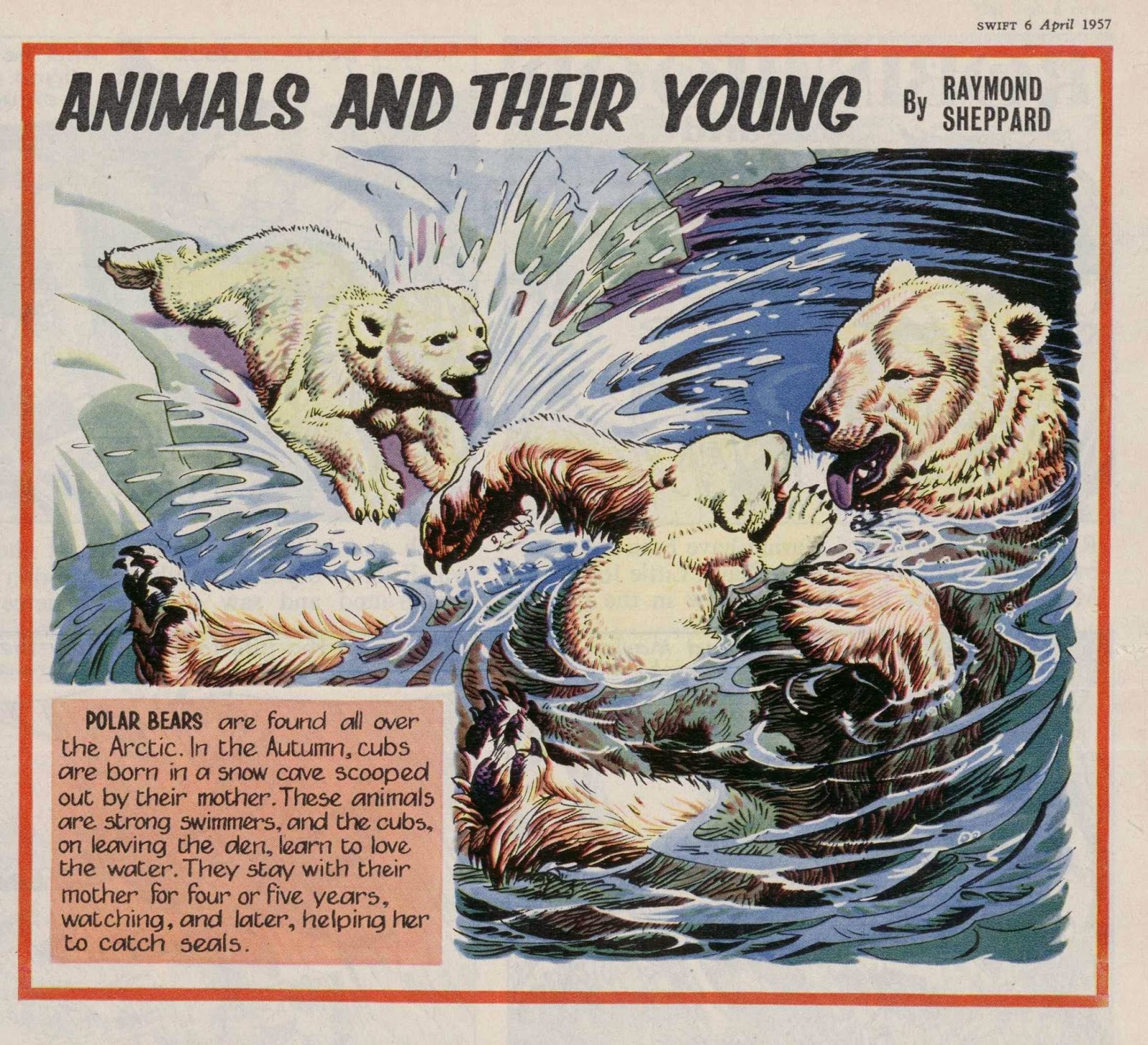 Raymond Sheppard Illustrator Animals And Their Young By