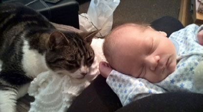 A special bond can be formed between cat and baby