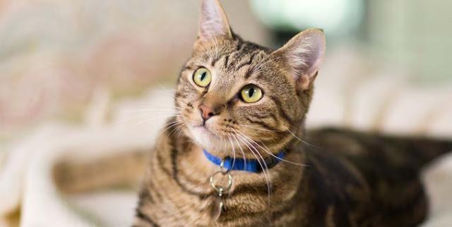 7 Hal Yang Membuat Kamu Akan Menyesal Apabila Kamu Tidak Memelihara Kucing Dirumahmu