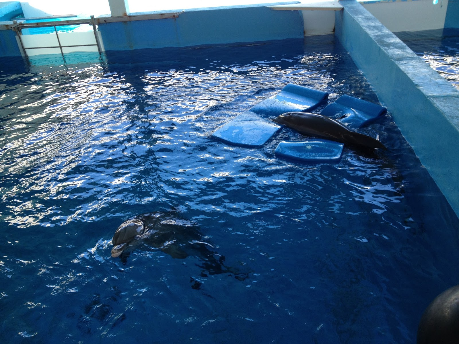 Sadie And Leah Winter The Dolphin