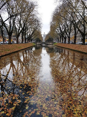 Reflections of trees and autumn leaves in water