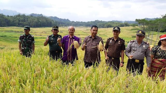 Budidayakan Padi Lokal, Pemda Tana Toraja Launching Panen Raya di Leatung Matallo