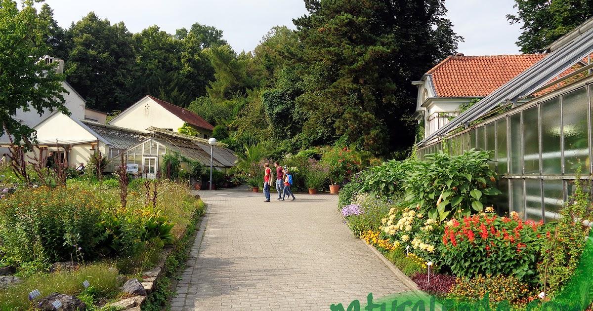 La naturaleza en casa jard n bot nico de m nster cap tulo 2 for Casa jardin botanico