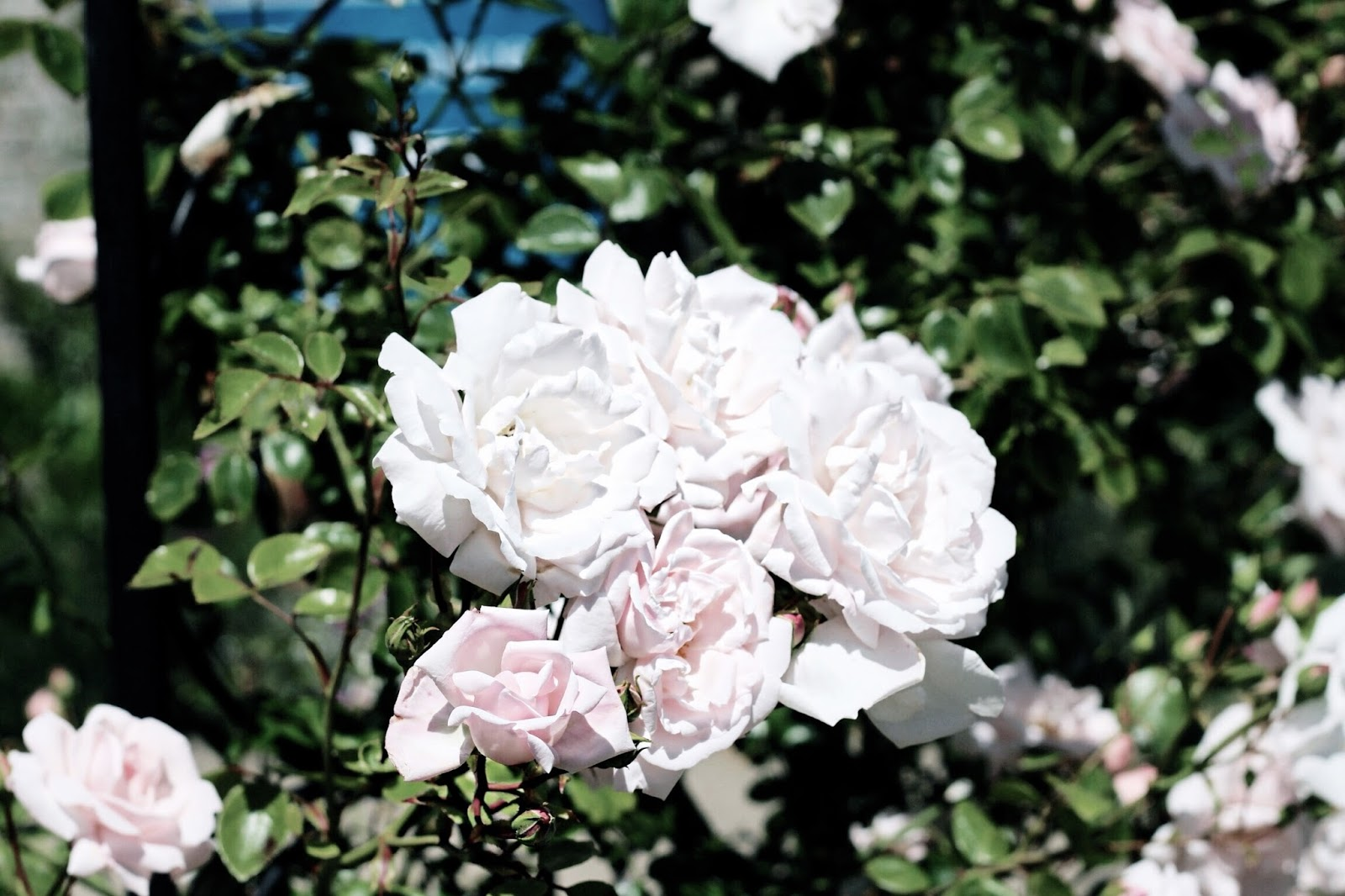 Feminine Light Pink Summer Blooms