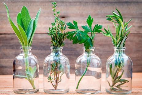 Marzua plantas arom ticas para su casa y su cocina - Plantas aromaticas en la cocina ...