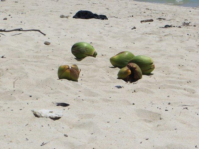 Кокос лежит на белом песке